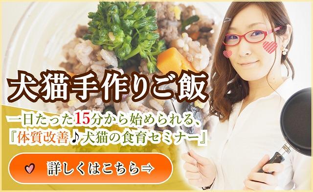 犬猫手作りご飯、体質改善犬猫の食育セミナー