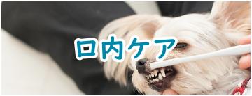 ペット(愛犬愛猫)のための口内ケア