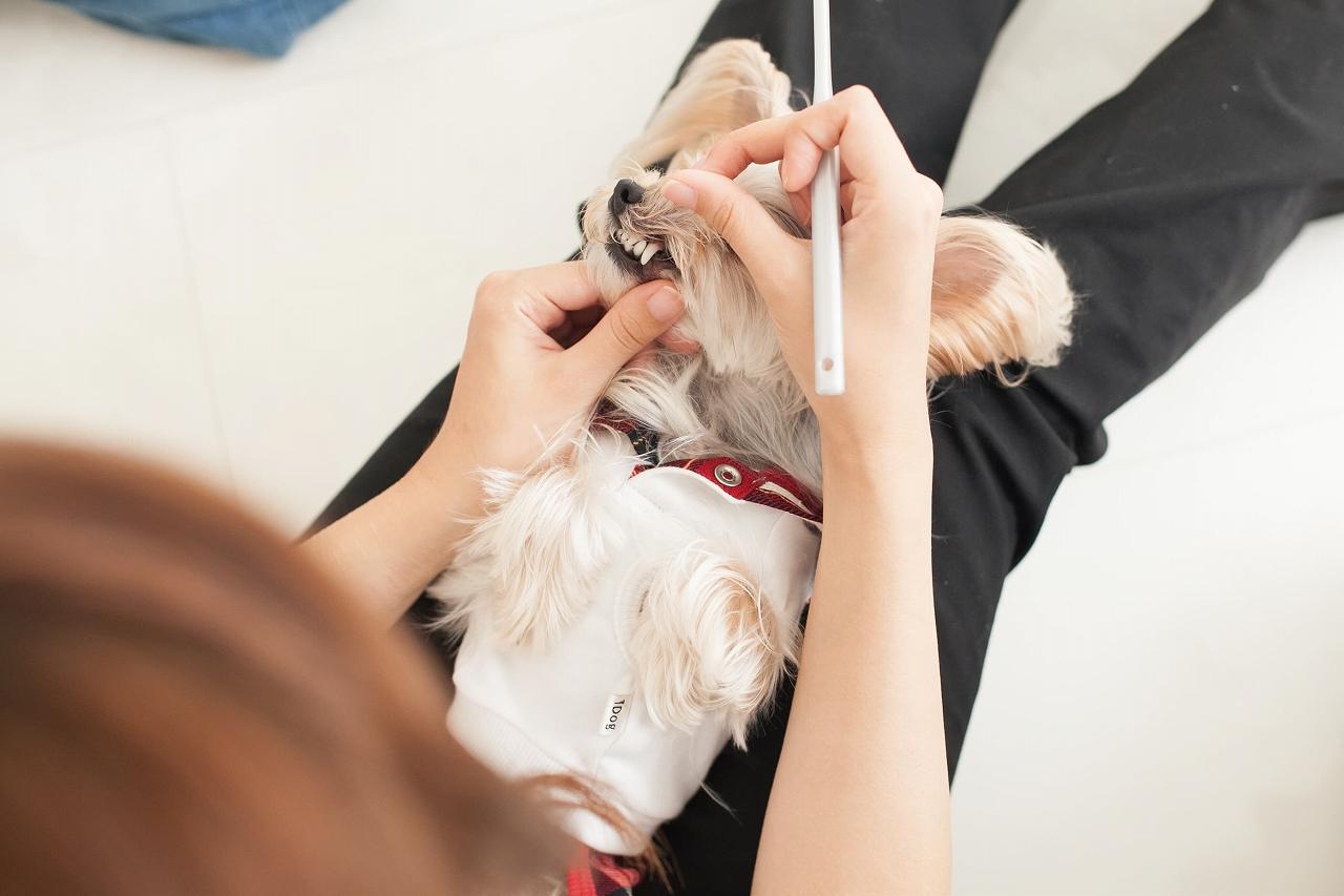 犬の 歯磨き の方法は?頻度は?嫌がる子には?